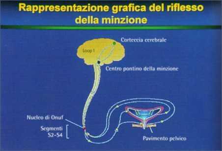 Incontinenza urinaria: riflesso minzione